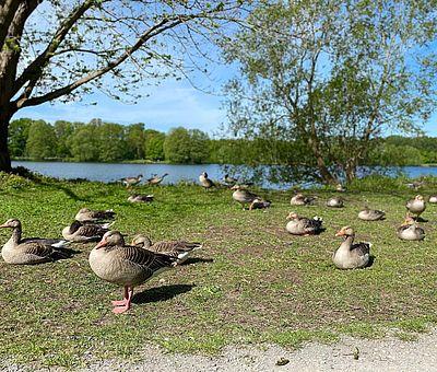 In Osnabrück gibt es viel Natur und Grün. Der Rubbenbruchsee lädt zu einem Natur-Erlebnis in Osnabrück ein.