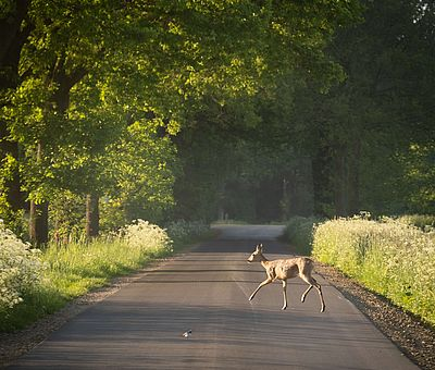 Radfahren auf der Artland-Rad-Tour im Osnabrücker Land