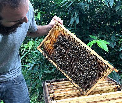 Die Bienen der Bioland-Imkerei in Badbergen im Osnabrücker Land werden artgerecht und in naturbelassenen Holzmagazinen gehalten.