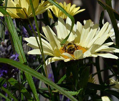 naturnah: Auf Hof Gösling in Osnabrück-Pye kann Honig direkt vom Imker vor Ort gekauft werden.