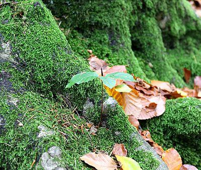 Auf diesem Bild ist ein Herbstwald zu sehen. Bunte Blätter liegen auf weichem grünen Moos. Das Foto wurde auf den Gesundheitspfaden in Bad Essen im Osnabrücker Land aufgenommen.
