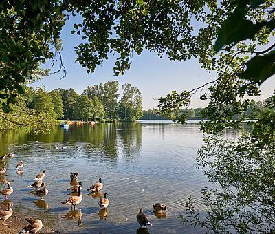 Die Osnabrücker Rund-Tour verknüpft einige der besten Ausflugsziele der Friedensstadt Osnabrück mit reizvollen Naturerlebnissen im UNESCO Natur- und Geopark TERRA.vita. Zu den Highlights der 48 km langen kompakten Radrundfahrt im Osnabrücker Land gehört auch der Rubbenbruchsee. Eine Runde um den See ist ungefähr 4 km lang.