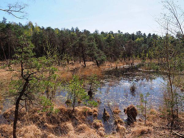 Naturschutzgebiet Grasmoor in Bramsche im Osnabrücker Land
