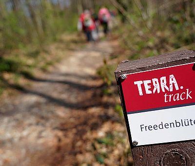 Wandern im Frühling! Der Rundweg TERRA.track Freedenblüte bietet Naturerlebnis auf 8 km