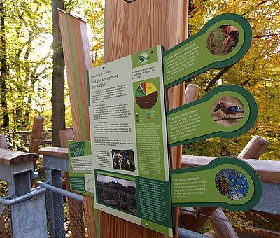 BAUMWIPFELPFAD in Bad Iburg. Erst geht's 30 Meter hoch und dann 440 Meter weit mitten durch die Wipfel mächtiger Laubbäume. Ein sagenhafter Ausblick wartet, aber auch viele Infos über das Leben der Tiere in dieser Höhe. Also, rauf mit euch auf den Baumwipfelpfad im Waldkurpark Bad Iburg.