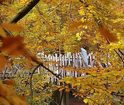 Die lebendige Natur erleben, spüren und verstehen wie auf dem Baumwipfelpfad in Bad Iburg – im Natur- und UNESCO Geopark TERRA.vita werden Erdgeschichte und Natur auf unterhaltsame Art und Weise vermittelt.