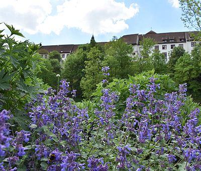 Die Landesgartenschau in Bad Iburg findet 2018 statt.
