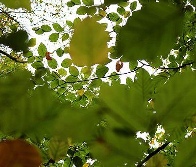 Auf einer Wandertour auf den Gesundheitspfaden in Bad Essen lädt der Wald zu einem meditativen Blick in die Baumkronen ein. Die Natur im Osnabrücker Land ist bestens dafür geeignet, um mit Freude fit zu bleiben.