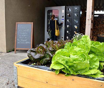 Das Ausflugslokal Hof Thiesing in Osnabrück betreibt auch einen Selbstbedienungs-Hofladen. Rechts vorne im Bild seht ihr eine Holzkiste mit eingepflanztem Salat. Insgesamt sind es vier Salatköpfe. Die zwei linken Salatköpfe sind von der Farbe dunkel und die beiden rechten Salatköpfe haben ein schönes helles Grün. Hinter der Holzkiste mit den Salaten sieht man einen Teil eines Holzschuppens. Dort wird kleingehacktes Holz, wahrscheinlich zum Heizen eines Kamins oder zum Grillen aufbewahrt. Links daneben ist der Selbstbedienungsautomat. Dort können Gäste 24 Stunden an 7 Tagen, frische Eier und Lebensmittel für Kleingeld bekommen. Eine Frau steht vor dem Selbstbedienungsautomaten und wirft gerade Geld ein, um etwas zu kaufen. Links neben dem Automaten steht eine Tafel, wo etwas mit Kreide drauf geschrieben wurde, dieses kann man auf dem Foto aber nicht lesen.