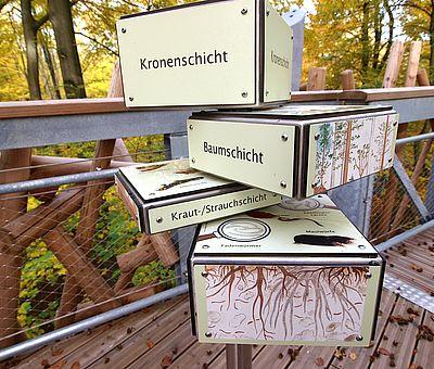 Rund 440 Meter weit verläuft der Baumwipfelpfad in Bad Iburg auf Lärchenholzbohlen durch die ansonsten verborgene Welt der Eichhörnchen, Fledermäuse und Spechte. Infotafeln und Mitmach-Stationen erklären auf unterhaltsame Art Natur und Erdgeschichte.