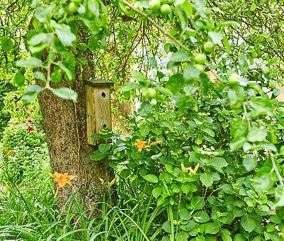 Garten des Restaurant-Café Kroneck-Salis in Bad Iburg mit Apfelbaum und Vogelhäuschen